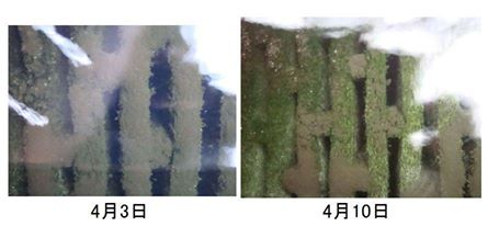 Filter Mat Comparison