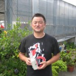 Koi breeders use Shinsuke
